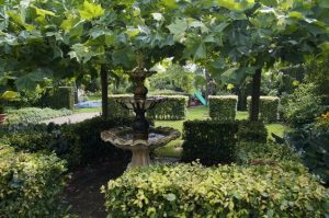 Bomen en planten in Doetinchem